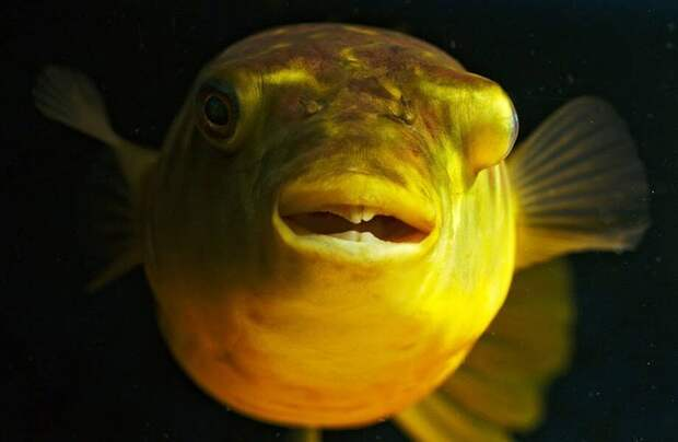 Видео: Почему милую с виду рыбку называют подводной мясорубкой