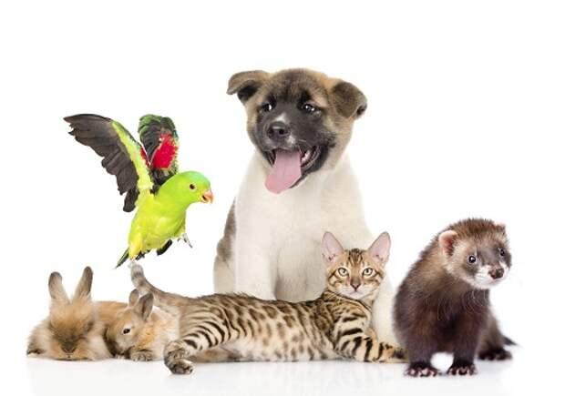 Картинки по запросу все домашние животные