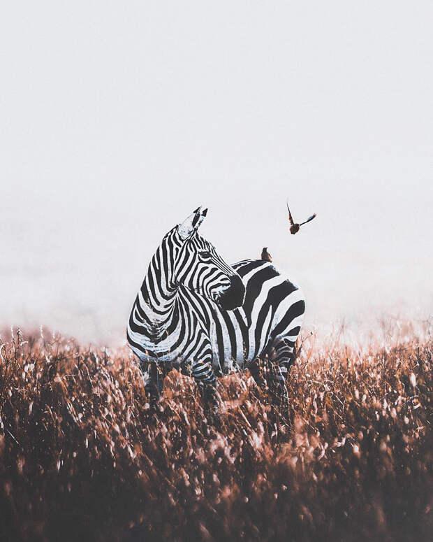Когда дикая природа вызывает восторг. Фотограф Донал Бойд 55