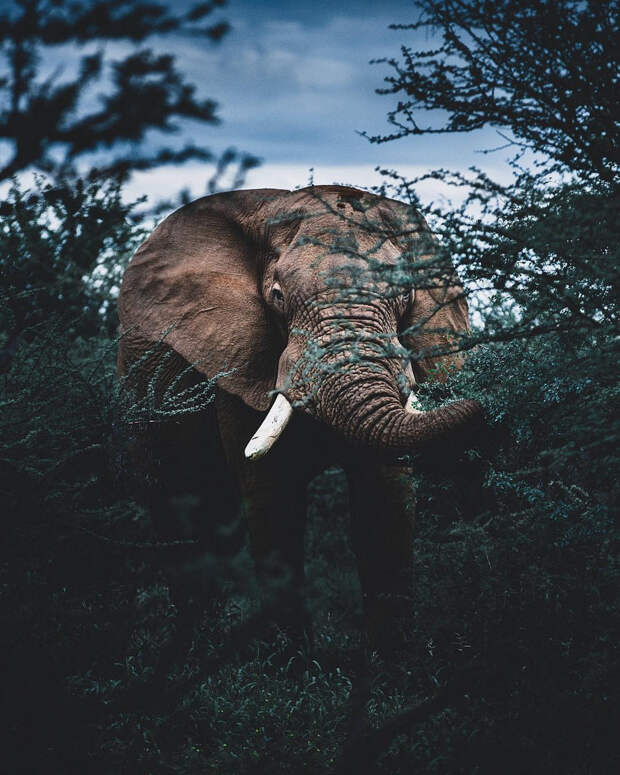 Когда дикая природа вызывает восторг. Фотограф Донал Бойд 75