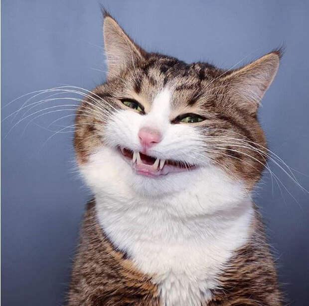 20 раз, когда кот попал в объектив папарацци