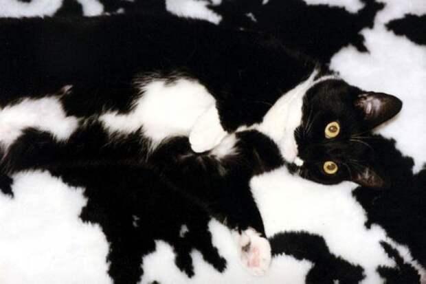 Испытание для самых внимательных: разглядите кота на фотках (21 фото)