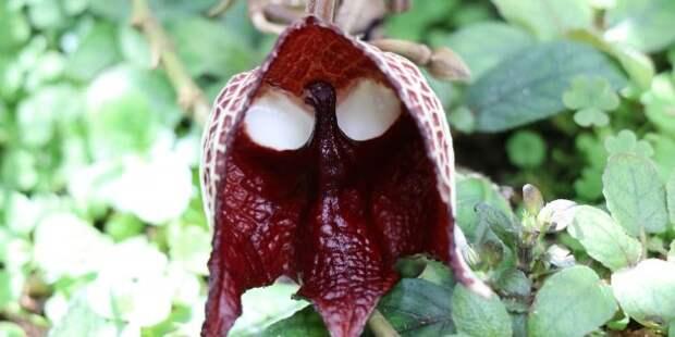 9 самых удивительных растений планеты Земля