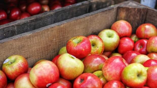 На петербургские прилавки не пустили почти 700 кг яблок-«оборотней» – видео