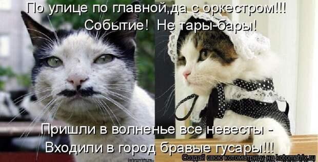 1474017300_kotomatricy-1