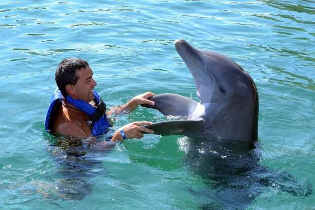 Вопрос на засыпку: почему дельфины спешат на помощь?