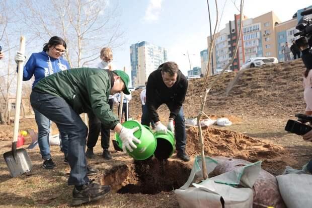 Депутаты проконтролируют замену деревьев, погибших на объектах благоустройства в зимний период