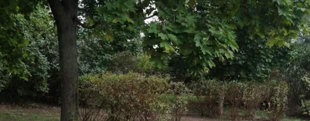 Газон с проплешинами рекультивировали в парке «850-летия Москвы»