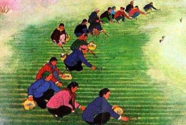 Рабочие на рисовых полях