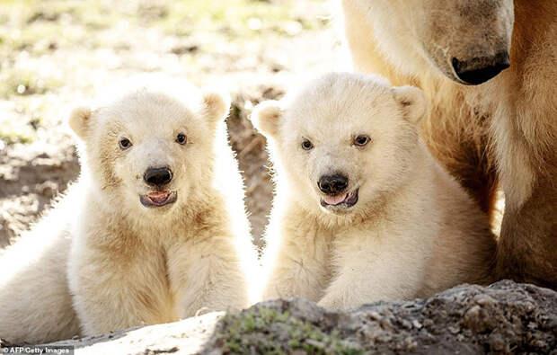Медвежата чувствуют себя хорошо.