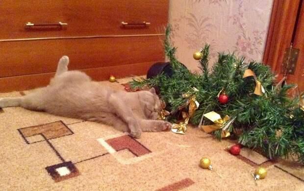 """""""Купили в этом году елку. Мало того, что сама упала, так ещё и кота уронила!"""" Смешные котики"""