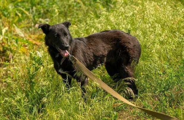 Зимой люди нашли собачку, которая еле ходила, а через месяц она внезапно родила
