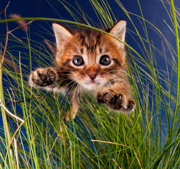 Котята в прыжке