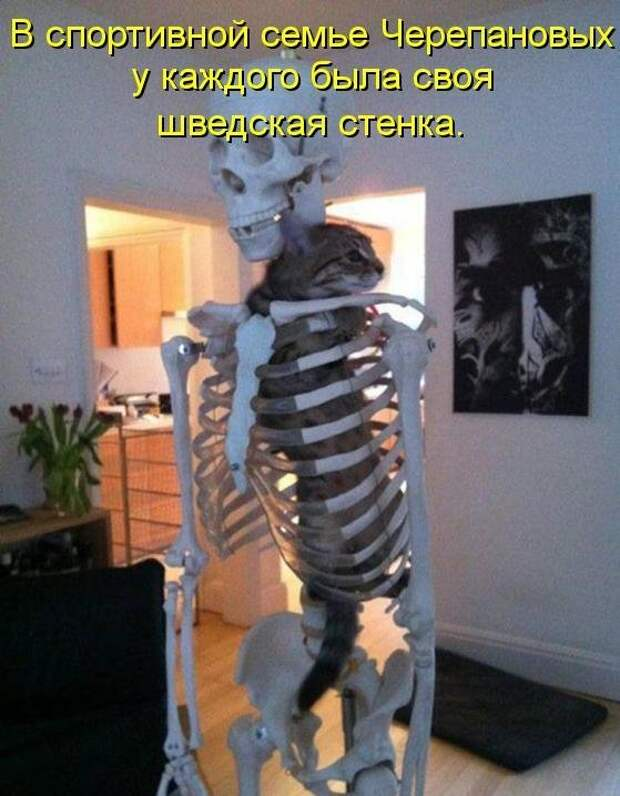 1450431443_kotomatrica-24