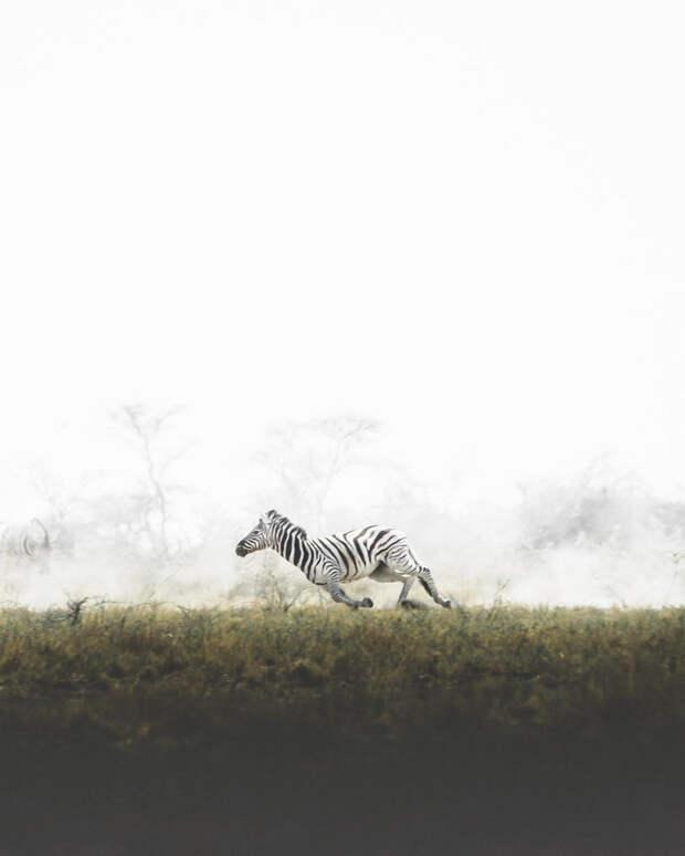 Когда дикая природа вызывает восторг. Фотограф Донал Бойд 31