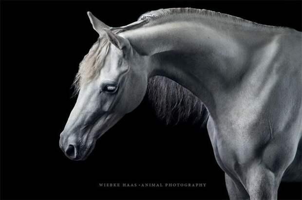 Мрамор животные, искусство, лошади, фотография