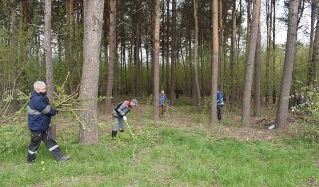 В лесопосадке на Баранова в Ижевске навели порядок