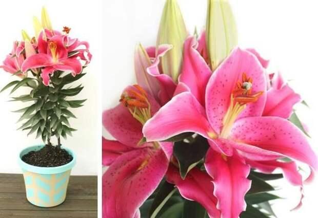 Растения - мужегоны, разрушающие семейное счастье