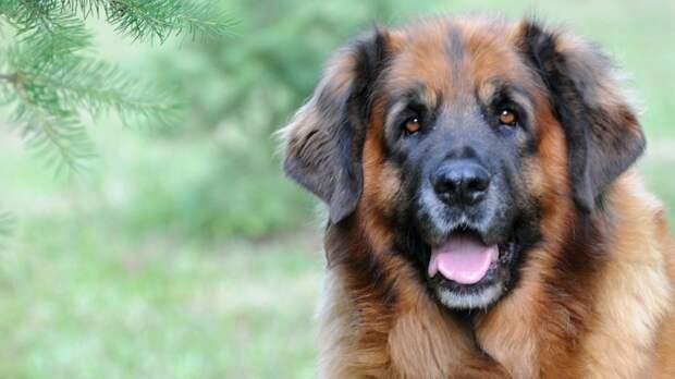 Разработка американских ученых избавит собак от запаха изо рта