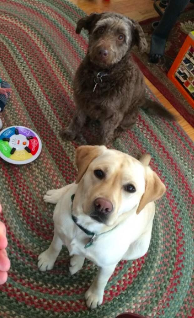 Их разъединила болезнь… Но спустя шесть месяцев встреча этих собак взорвала ютуб!