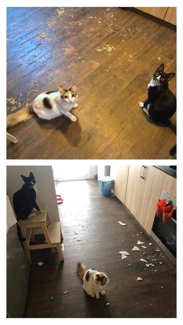 20 смешных фото котов, которые показывают, кто в доме хозяин