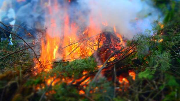 Высокая лесная пожароопасность ожидается на западе и юге Приморья