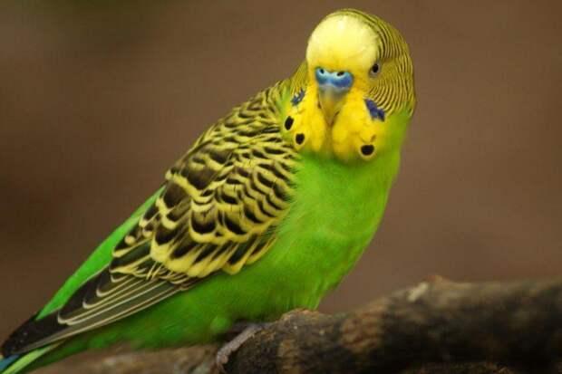 Прорыв попугая на волю