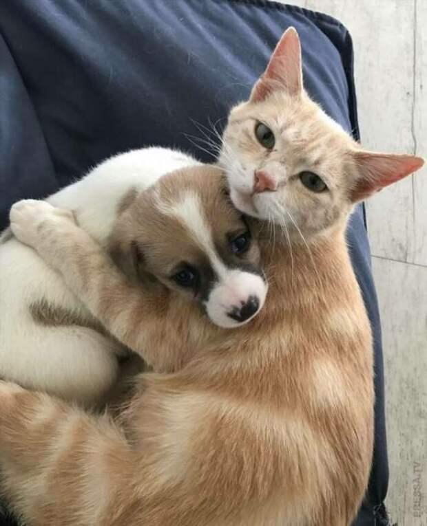 Животные, усыновлённые в ноябре