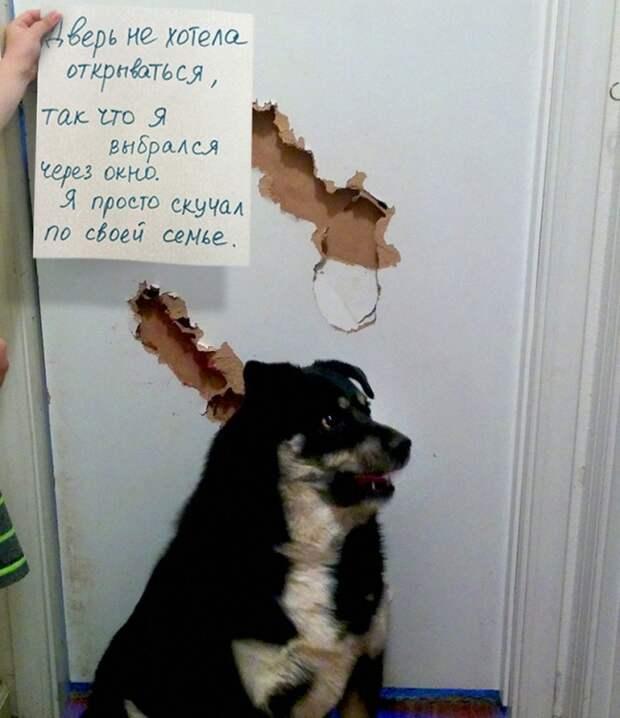 Псы-проказники, на которых просто невозможно злиться)) Им ооочень стыдно!