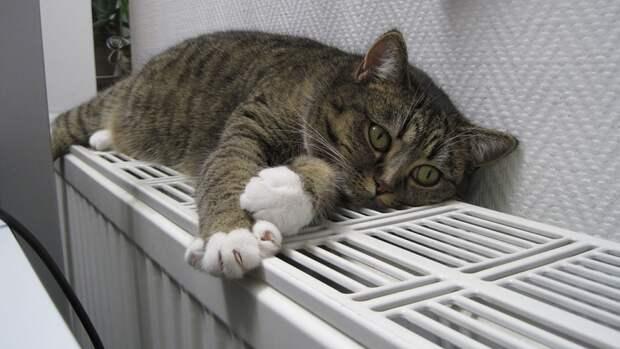 Петербуржцам рассказали, когда ждать отключения отопления