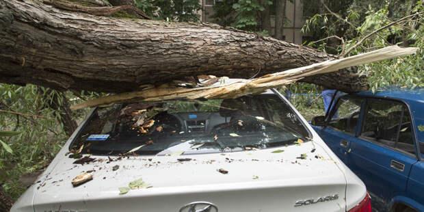 Из-за грозы повалено 65 деревьев в Москве