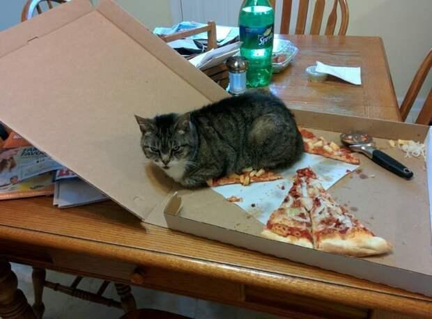 7. Признаем честно: ничто не радует кошек больше, чем хорошая картонная коробка Кошка в доме, домашние животные, забавные фото с котами., кошка, кошки, фото кошек, хозяева животные, юмор