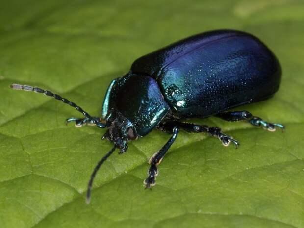 beetle-e1380733679317