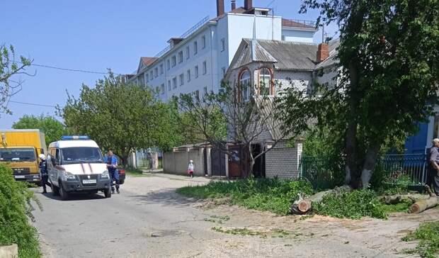 Вцентре Белгорода дерево упало наконтактную сеть троллейбуса