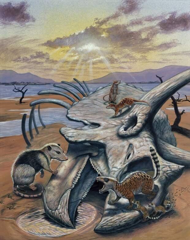 Некоторые млекопитающие позднего мела - раннего палеоцена Северной Америки: слева — эодельфис (Eodelphis), вверху — птилоды (Ptilodus), справа — гобиаконодоны (Gobiaconodon).