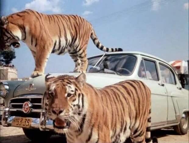 Кадр из фильма *Полосатый рейс*, 1961 | Фото: vokrug.tv