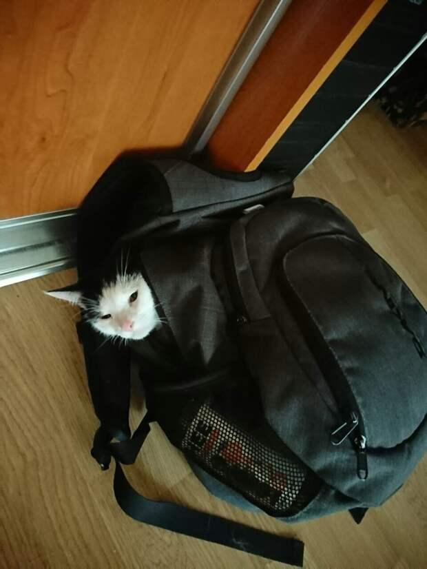 Я стала другом для Кота...
