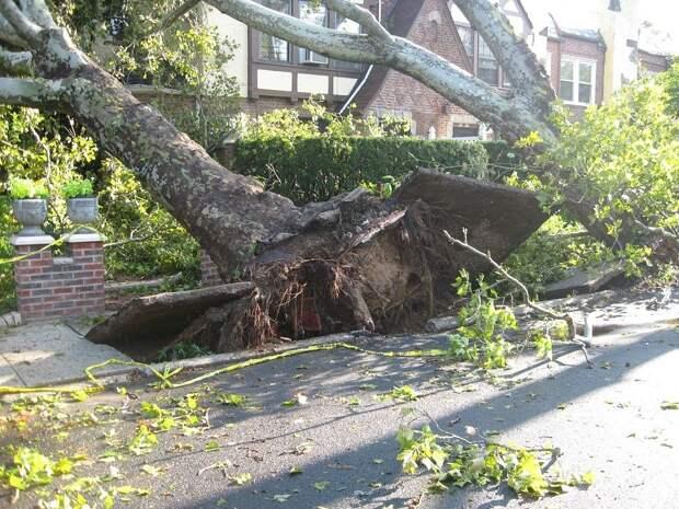 В Анадырском проезде дерево упало на три автомобиля