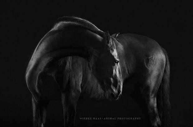 Темная красота животные, искусство, лошади, фотография
