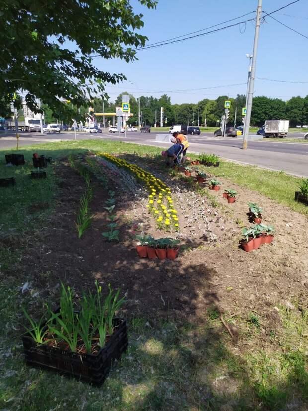 На Ботанической коммунальщики высадили цветы на клумбе