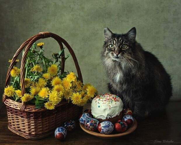 Коты и Пасха: 25 усатых, которые были рады куличам и крашеным яйцам Пасхальный кот, без кота и жизнь не та, животные, котопасха, пасха