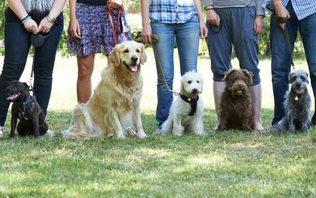 Собакаобучака: куда пойти учиться псу
