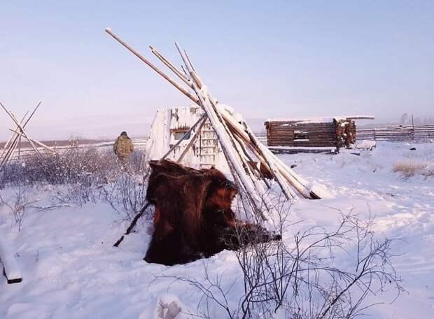 В России проживает около 480000 якутов, еще 20000 - в Украине, Казахстане, Китае Порода, животные, лошадь, россия, саха, фото, якут, якутия