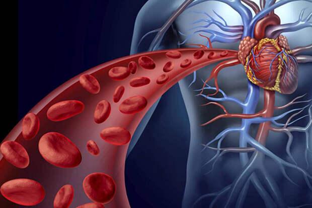 Как очистить кровь и укрепить сосуды?