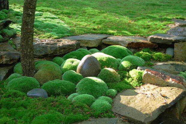 Картинки по запросу мох в ландшафтном дизайне