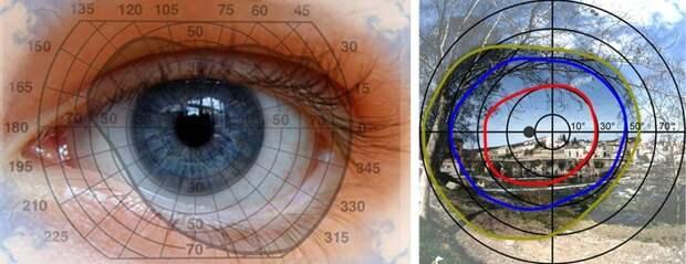 21. У женщин хорошо развито периферийное зрение. У мужчин — туннельное. женщина, интересное, тело, факты