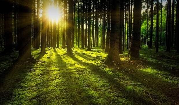 Минприроды разъяснило правила нахождения в лесах Карелии