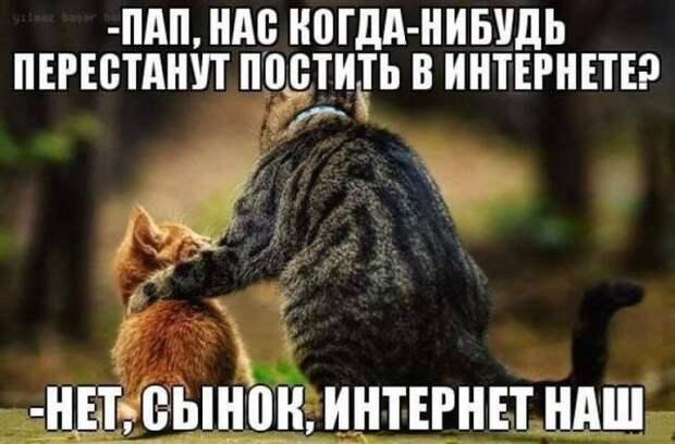 120 признаков настоящего кошатника)))