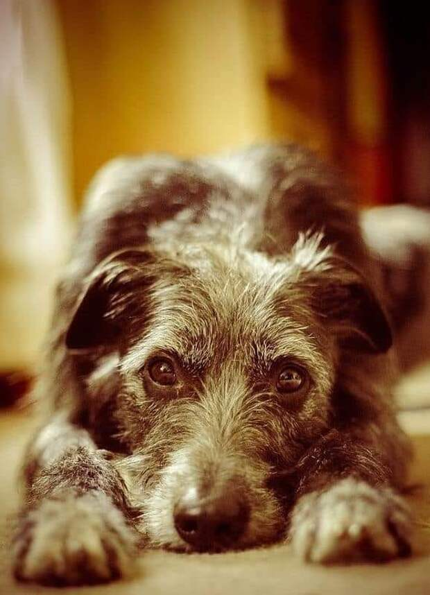 У тещи был пес, просто черный лохматый урод