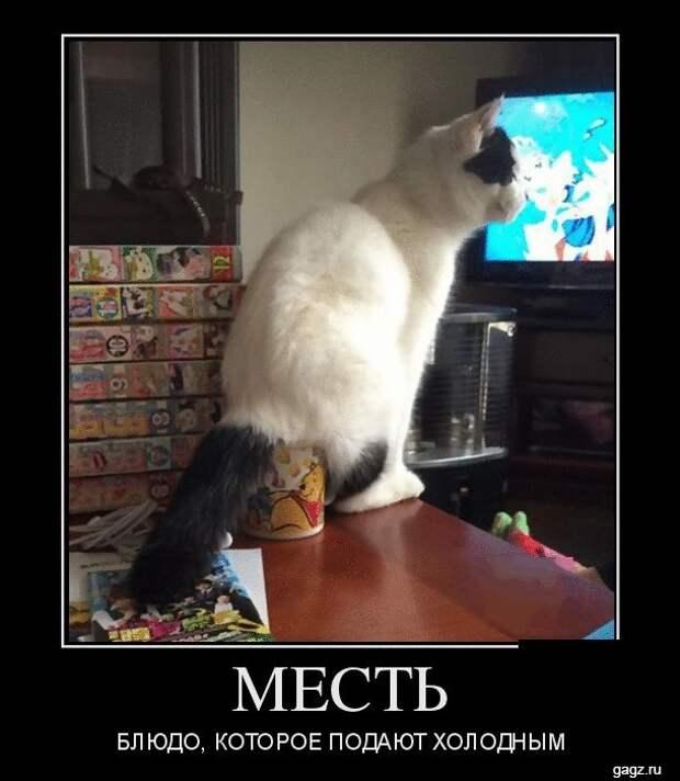 demotivator_prikol_gagz_ru_14458544